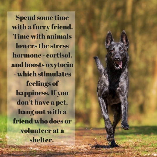 Spend some time with a furry friend. Time with animals lowers the stresshormone - cortisol, and boosts oxytocin - which stimulates feelings ofhappiness. If you don_t have a pet, hang o